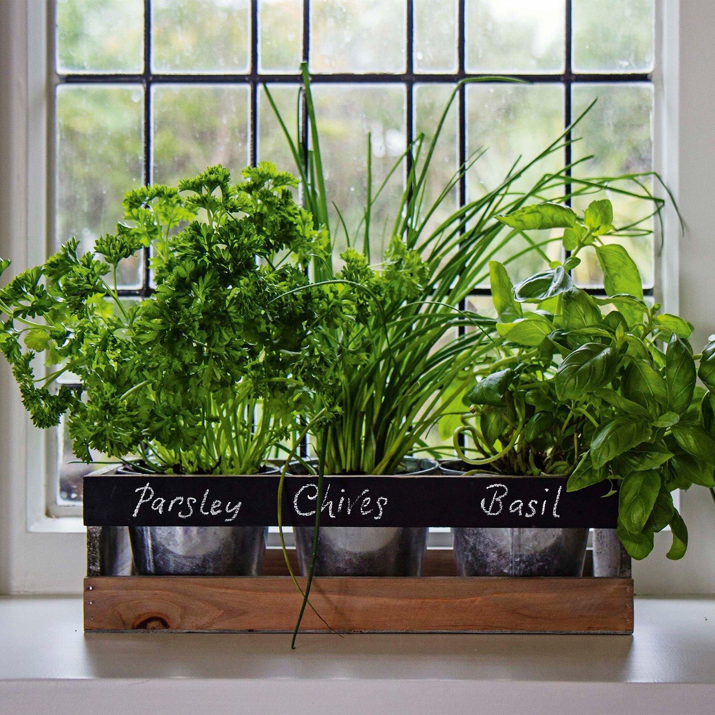 Mon Test Du Jardin D Interieur Le Jardin Interieur Viridescent