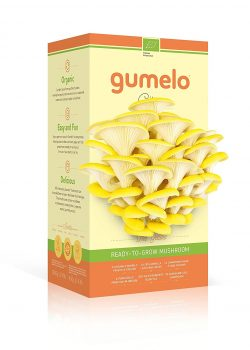 GUMELO Kit Champignons Pleurotes Bio (Citrus Jaunes)
