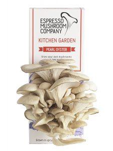 Le kit de culture de champignons Espresso mushroom