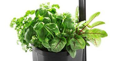 Tregren Genie noir 3 plantes, mini Jardinière et Potager d'intérieur