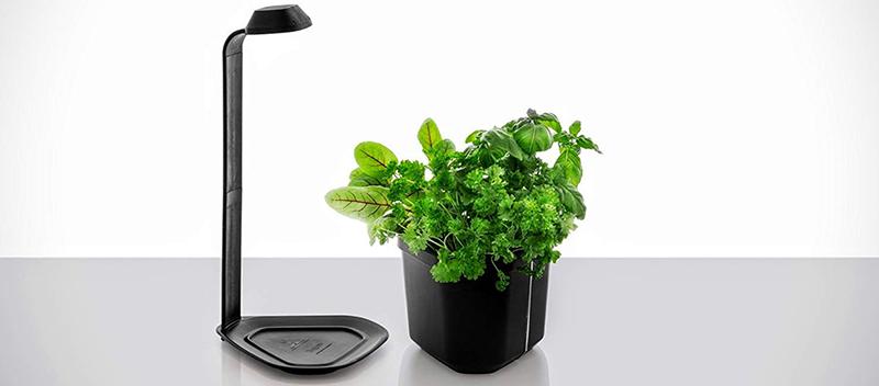 Tregren Genie noir 3 plantes, mini Jardinière et Potager d'intérieur Autonome pour herbes aromatiques, petits légumes, fleurs - Kit prêt à pousser