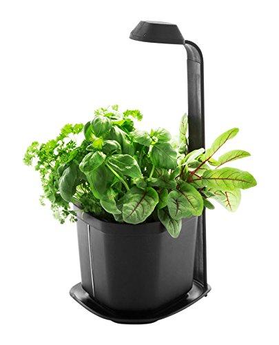 Tregren Genie Noir 3 Plantes, Mini Jardinière Et Potager Du0027intérieur
