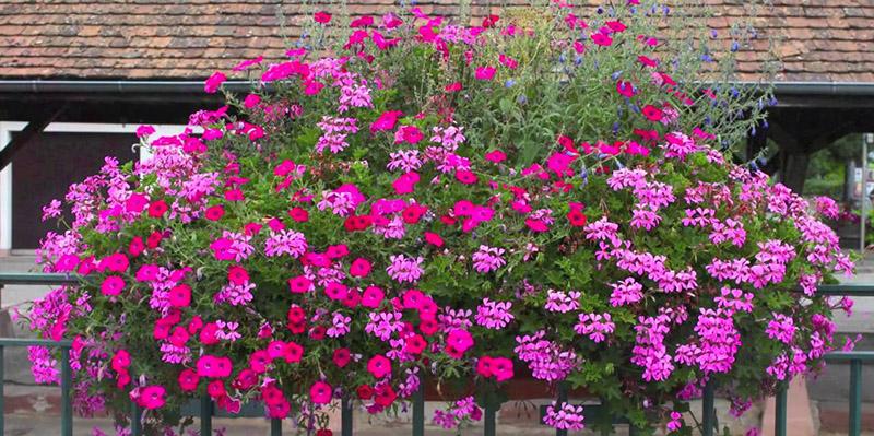Les Quatres Saisons D Une Jardiniere Potager D Interieur