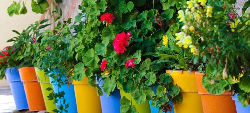 Découvrez mon TOP des Meilleurs Pots de fleurs - Sélection ...