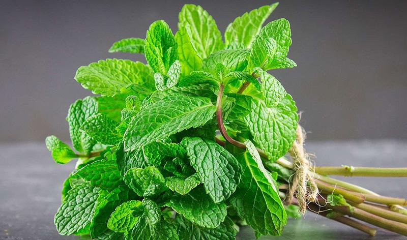 aromates détox la menthearomate aux multiples vertus