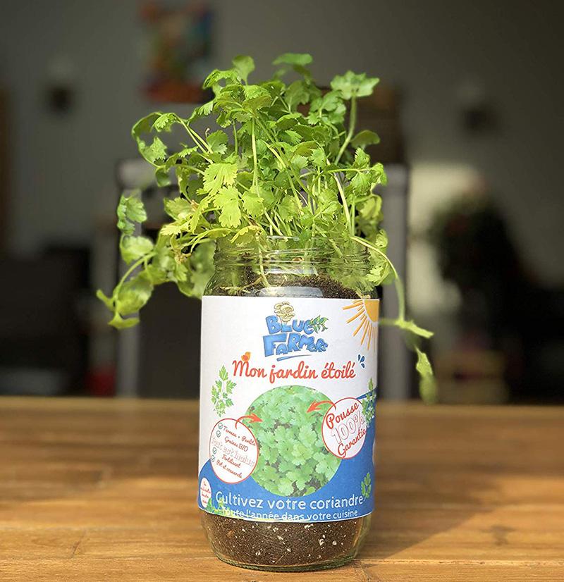 Blue Farmers Herbes aromatiques Cultivez votre Basilic à la Maison