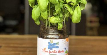 Blue Farmers Herbes aromatiques Cultivez votre Coriandre à la Maison