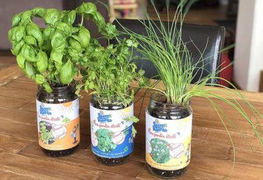 Blue Farmers - Herbes aromatiques - Cultivez votre Coriandre Ciboulette et Basilic à la Maison