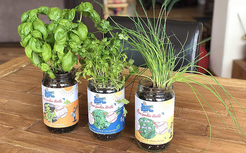 Blue Farmers   Herbes Aromatiques   Cultivez Votre Coriandre Ciboulette Et  Basilic à La Maison