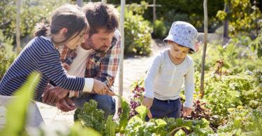 Initier ses enfants à une alimentation plus saine avec un potager intérieur