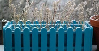 Quelle plante ou fleur dans sa jardinière en Décembre ?