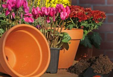Quelle plante ou fleur dans sa jardinière en Janvier ?