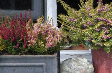 Quelle plante ou fleur dans sa jardinière en Novembre ?
