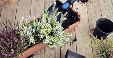 Quelle plante ou fleur dans sa jardinière en Octobre ?