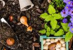 Quelle plante ou fleur dans sa jardinière en aout ?