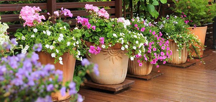 Quelle plante ou fleur dans sa jardinière en avril ?