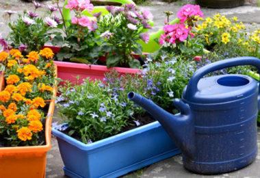 Quelle plante ou fleur dans sa jardinière en février ?