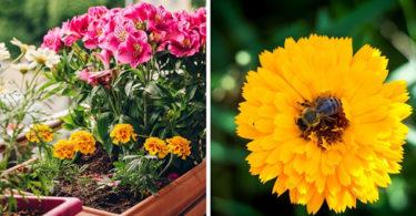 Quelle plante ou fleur dans sa jardinière en juin ?