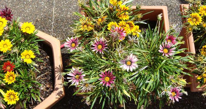 Quelle plante ou fleur dans sa jardinière en mai ?
