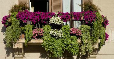 Quelle plante ou fleur dans sa jardinière en septembre ?