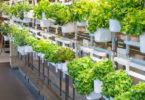 Test du jardin intérieur - Prêt à Pousser Modulo