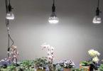 Comparatif des Meilleures Ampoules à LED Horticole