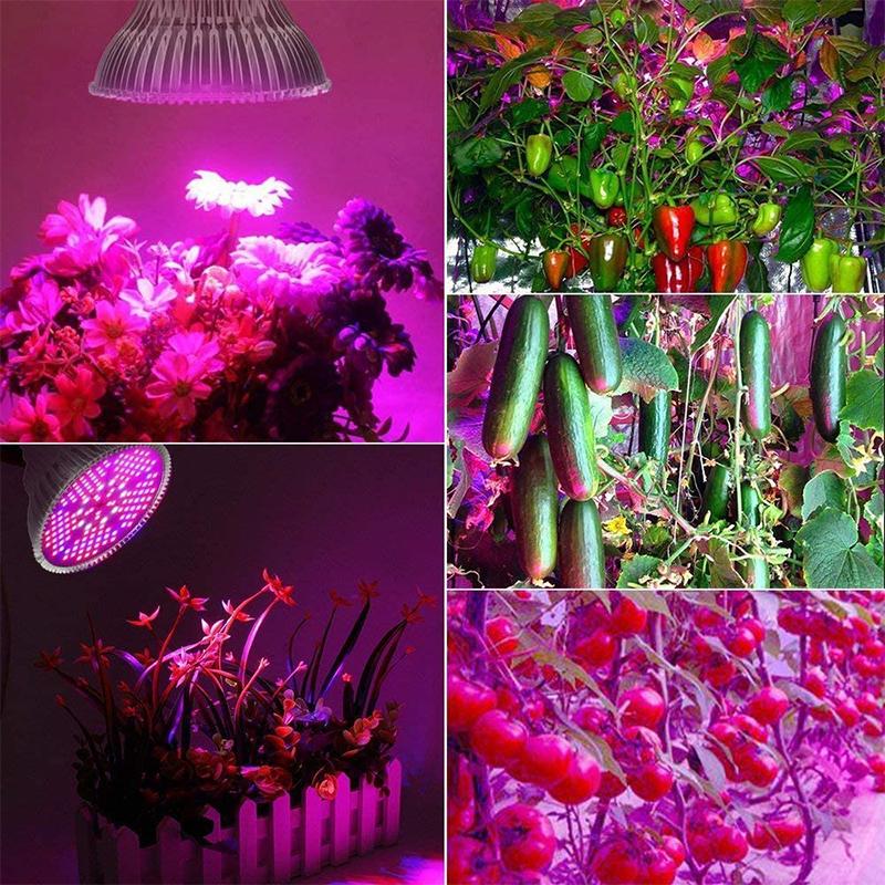 Test - Lampe de Plante Lampe de Croissance Lampe E27 100W 150 LEDs LED Grow Light de Croissance Plein Spectrum,des Fleurs et des Légumes Intérie