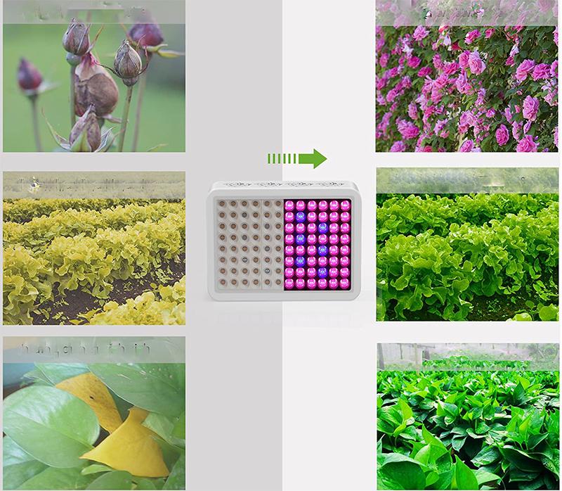 Test - Led pour Plante TOPLANET 300w Réflecteur Led Horticole Croissance Lampe Culture Grow Light Full Spectrum Bleu pour HydroponiqueGrow BoxSerre Plants