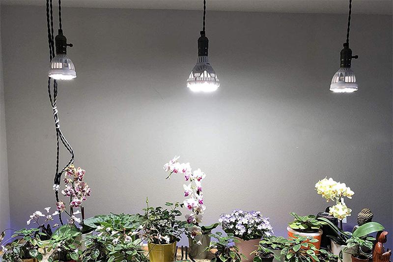 Test - SANSI Lampe Horticole LED à Spectre Complet 24W Lampe de Croissance E27 à Cycle Complet, 2000lm Lumière du Jour Blanc,Lampe de Plante pou