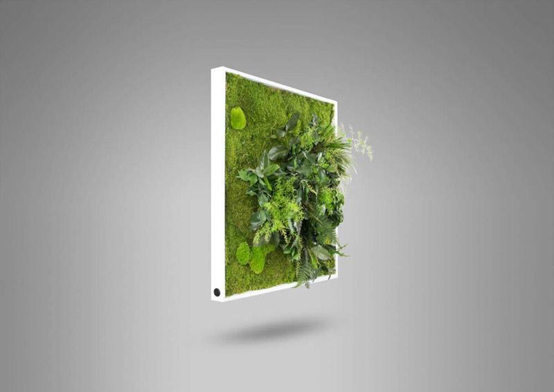 """avis - L'Originale"""" Tableau de plantes avec mousse plate et plantes naturelles stabilisées"""