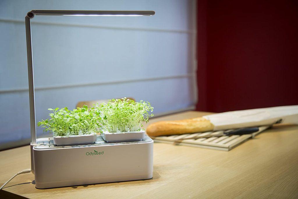 Odyseed - Potager d'Intérieur 100% Bio - Cultivez vos herbes aromatiques - Coriandre et Basilic Vert Inclus